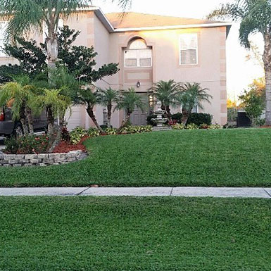 Lawn & Shrub Services